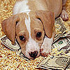 Tax Deduction For Pet Care Proposed