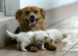 The Scoop: Mama Mutt Nurses Three Orphaned Kittens!