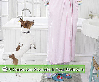 6 Things Found in Your Bathroom That Can Kill Your Dog!