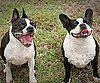 Pet Pic of the Day: Two-For-One Mugsy and Pixie