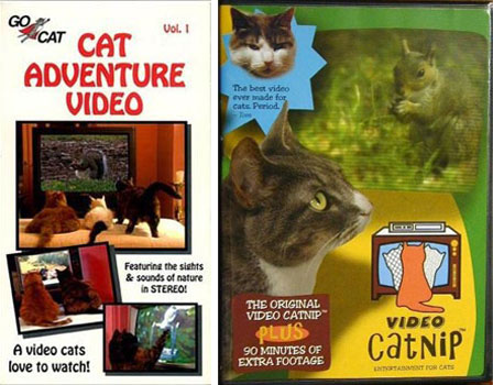 Cat Adventure Video and Video Catnip
