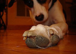 Do Tell: Do You Think Dog Paws Smell Like Corn Chips?