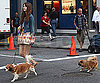 Photo Slide of Mischa Barton Walking Her Dogs Around The NYC Set of The Beautiful Life