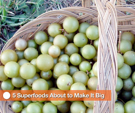 5 Superfoods About to Make It Big