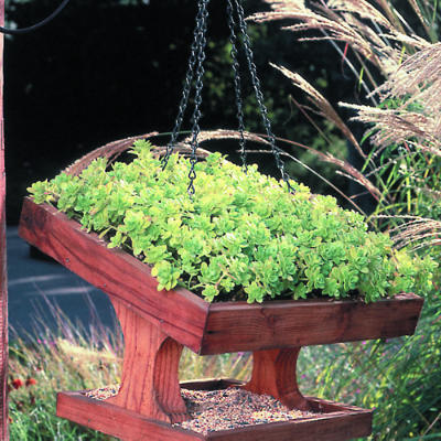 Sunset puts a green roof on a bird feeder. I love this idea!