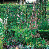 Sunset shows you how to construct a tipi trellis for your plants.