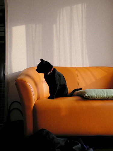 A leather couch looks less traditional in a melony orange color.  Source:  Flickr User taiyofj