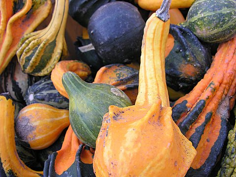 Head to your farmers market to pick up some Autumn gourds. You can use them to create table arrangements. Simply group them in a pretty bowl or tray to create a fun Fall feel.  Source: Flickr User baha1210