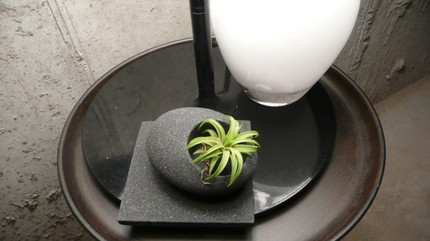 Pebble Garden No. 1 ($32) consists of a black pebble, the air plant, and the square black coaster.