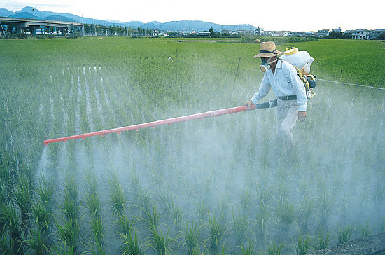 12 Foods With High Amounts of Pesticides