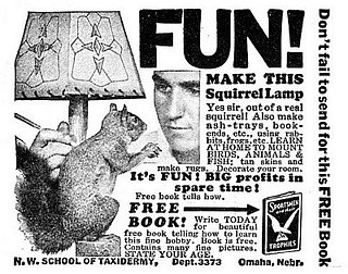 Make a Squirrel Lamp