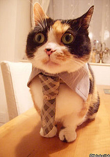 A Cat in a Tie