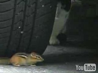 Crouching Kitty, Hidden Chipmunk