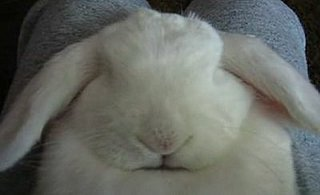 Bunny Asleep and Snoring