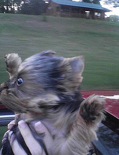 Dog in Convertible With the Top Down