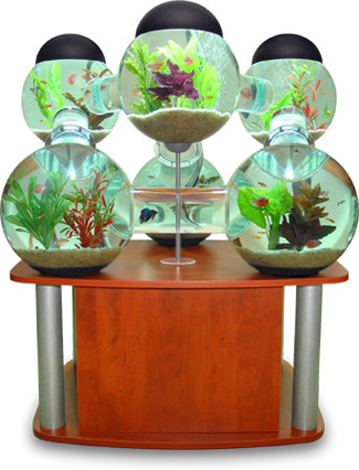 Silverfish Aquarium for Your Pampered Fish
