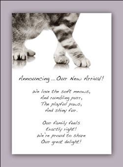 Sincerely, Fido Greeting Cards For Your Pets