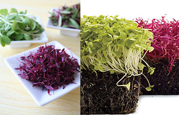 Microgreens For the Home Cook: Love It or Hate It?