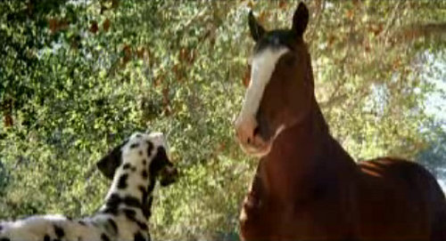 Story Behind the Scenes: Clydesdales and Dalmatians