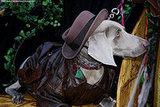 mardi_gras_barkus_parade-064