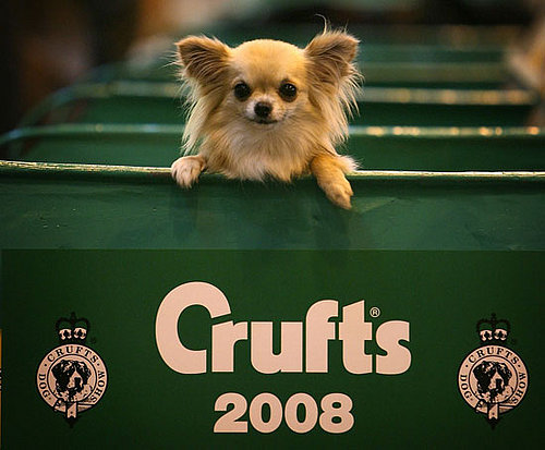 PetSugar's Crufts 2008 Cheat Sheet