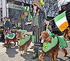 Globetrotters: Tokyo&#039;s Parading Irish Setters
