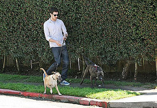 Celeb Redo: Help Adam Brody Juggle Two Leashes Too Many