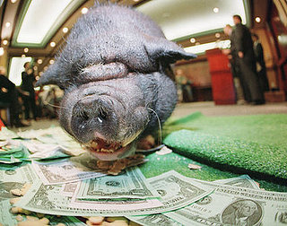 Oink Oink! Congress Spends $17.2 Billion on Pet Projects