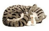 Perfect Petzzz: Gray Tabby