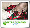 Pet Pics on PetSugar 2008-12-31 09:30:28