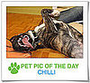Pet Pics on PetSugar 2009-01-13 09:30:22