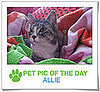 Pet Pics on PetSugar 2009-02-02 09:30:14