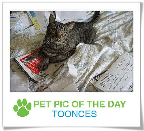 Pet Pics on PetSugar 2008-11-13 09:30:12