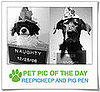 Pet Pics on PetSugar 2008-12-16 09:30:24