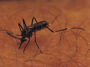 You Asked: Do I Need to Worry About West Nile Virus?