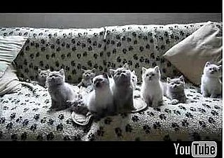 Cute Alert: Kittens Dance in Unison