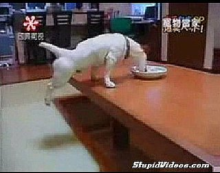 Dog Eats With Hind Legs Up in the Air