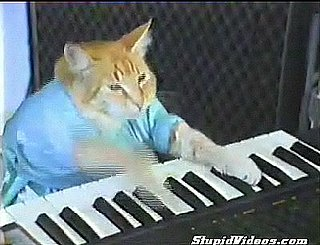 Cat Plays the Organ