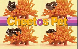 Grow Your Own Cheetos!
