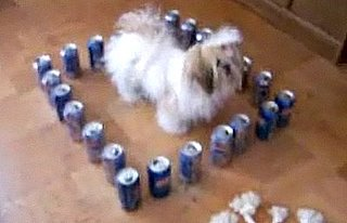 Dog Trapped in Fortress of Cans