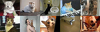GiggleSugar's Best Cat Videos of 2008