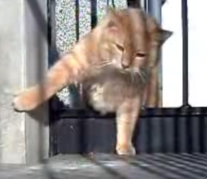 Fat Cat Squeezes Through Fence