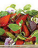 10 Original Summer Salads