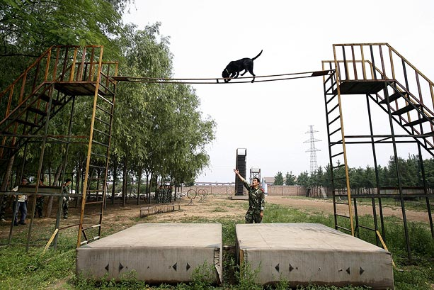 Beijing's Rescue Dogs Take A Bite Out of Crime at Olympics