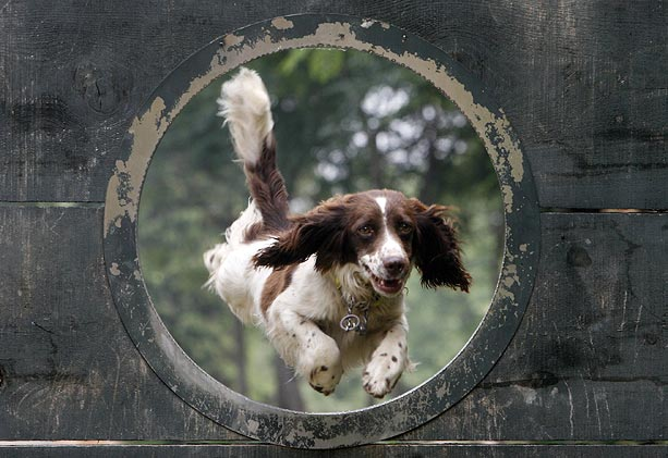 Through The Hoop!