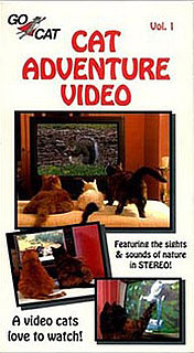 Does the Cat Adventure Video Really Work?