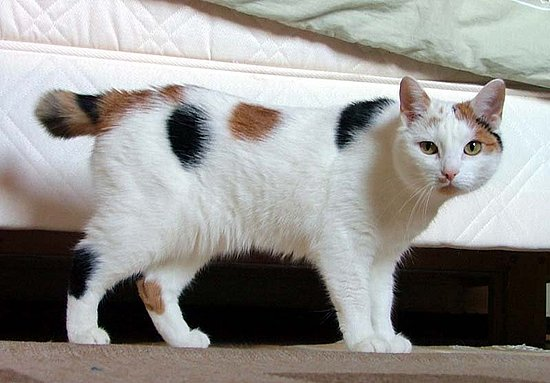 Guess What Breed of Cat?
