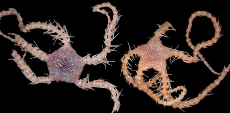 274 New Species Found off Tasmanian Coast