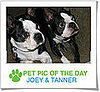 Pet Pics on Petsugar 2008-10-27 07:00:59