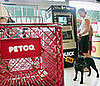 Petco Halloween Photo Shoot and Costume Contest